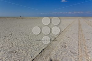 4wd track saltpan Kubu Island - Popular Stock Photos