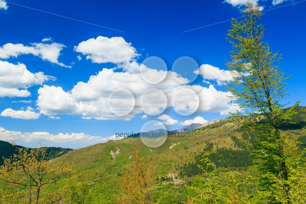 Apennine Mountains Italy vegetation - Popular Stock Photos