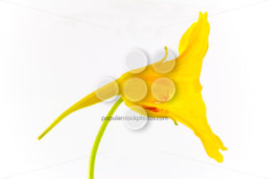 Artistic yellow flower - Popular Stock Photos