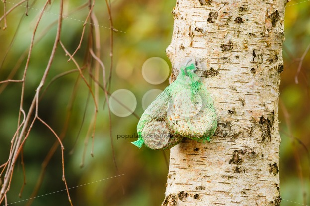 Birdfood fat and seeds - Popular Stock Photos
