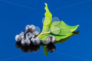 Blueberry on blue background with leaf - Popular Stock Photos