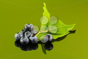 Blueberry on green background with leaf - Popular Stock Photos