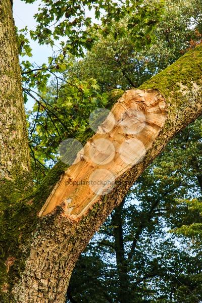 Branch tree broken by storm – Popular Stock Photos