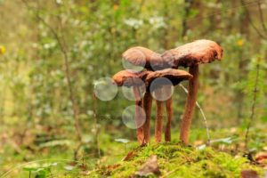 Brown mushroom close up in forest - Popular Stock Photos