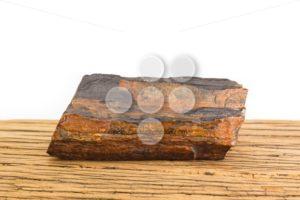 Brown petrified wood oak surface white background. - Popular Stock Photos