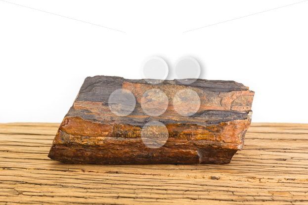 Brown petrified wood oak surface white background. – Popular Stock Photos