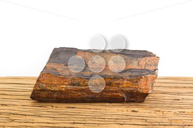 Brown petrified wood oak surface white background. – Popular Stock Photos