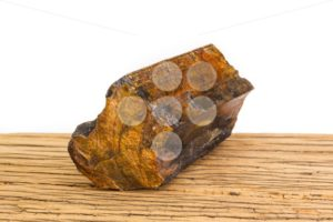 Brown petrified wood oak surface white background front focus. - Popular Stock Photos