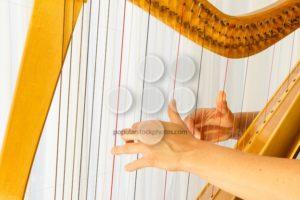 Close up hands playing celtic harp - Popular Stock Photos