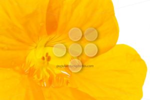 Close up into yellow flower - Popular Stock Photos