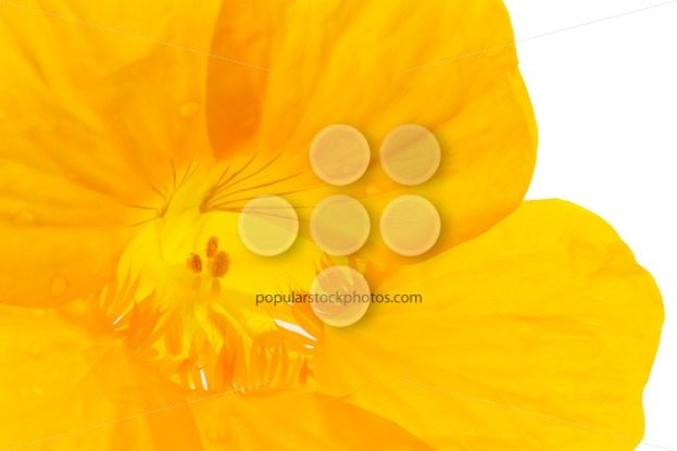 Close up into yellow flower – Popular Stock Photos