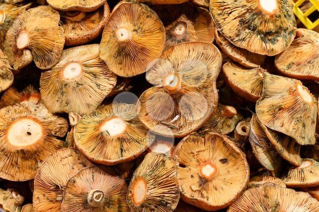 Close up mushroom food market - Popular Stock Photos