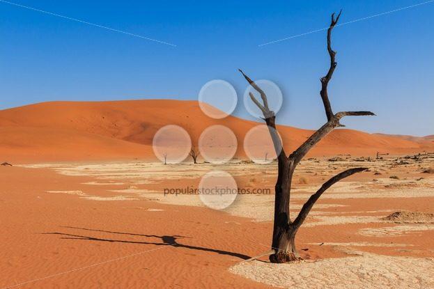 Close up tree deadvlei valley Namibia – Popular Stock Photos