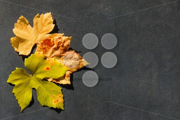 Colorful autumn leaves frame stone message area – Popular Stock Photos