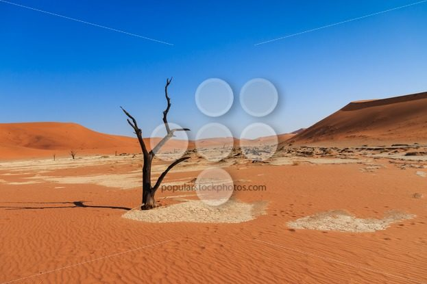 Dead tree deadvlei valley Namibia – Popular Stock Photos