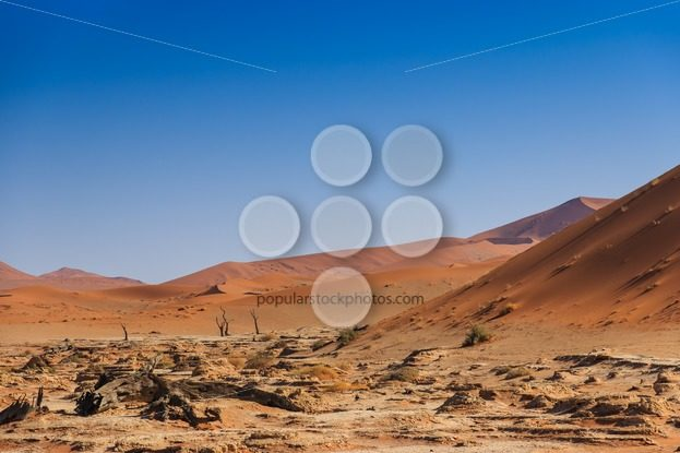 Deadvlei valley Sossuvlei Namibia – Popular Stock Photos