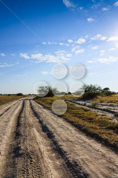 Dirt road Nxai Pan national park Botswana – Popular Stock Photos