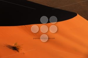 Edge red sanddune Sossusvlei vegetation - Popular Stock Photos