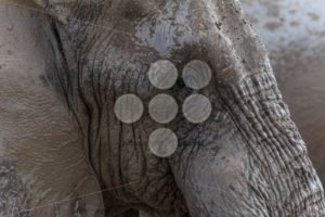 Elephant face - Popular Stock Photos