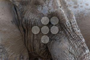 Elephant face - Popular Stock Photos