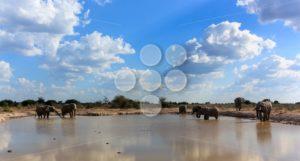 Elephants the gathering - Popular Stock Photos