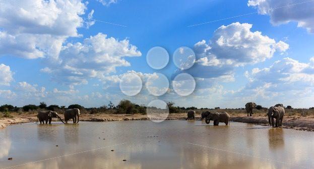 Elephants the gathering – Popular Stock Photos