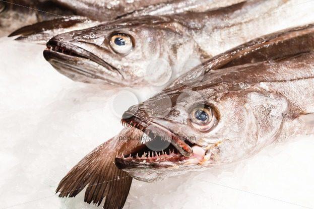 Fresh fish in market Barcelona – Popular Stock Photos