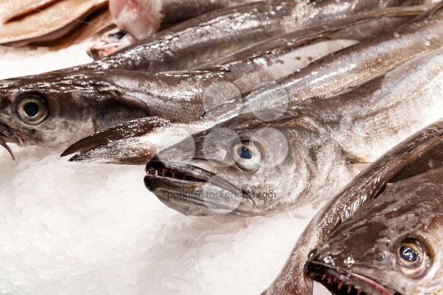 Fresh fish in market Barcelona - Popular Stock Photos