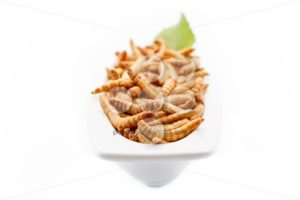 Healthy mealworms close up with decoration - Popular Stock Photos