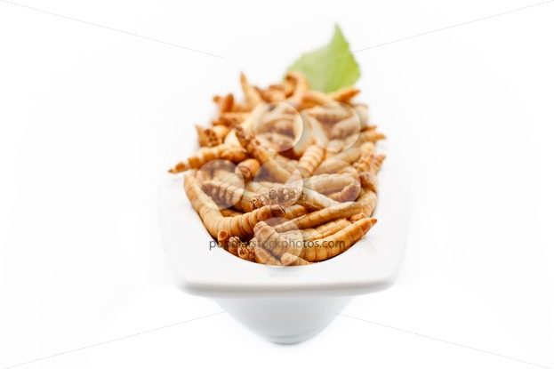 Healthy mealworms close up with decoration – Popular Stock Photos