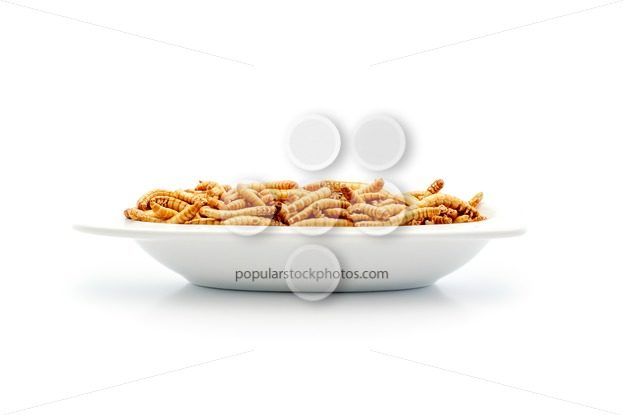 Healthy mealworms on small plate – Popular Stock Photos