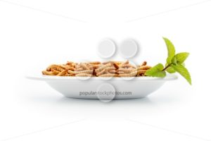 Healthy mealworms on small plate with decoration - Popular Stock Photos