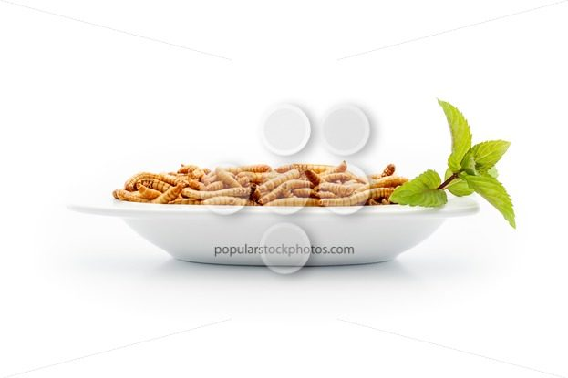 Healthy mealworms on small plate with decoration – Popular Stock Photos