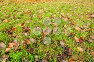 Leaves on grass in autumn at the end of summer - Popular Stock Photos