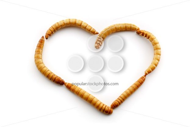Love mealworms – Popular Stock Photos