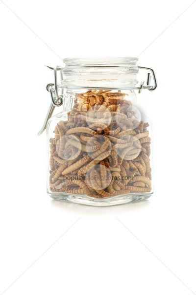 Mealworms in jar – Popular Stock Photos