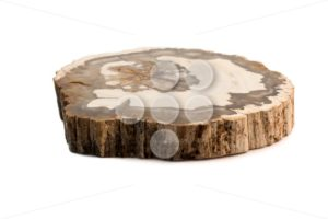 Petrified wood Madagascar flat isolated white - Popular Stock Photos