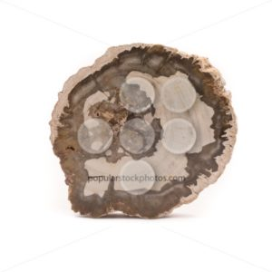 Petrified wood Madagascar front isolated white - Popular Stock Photos