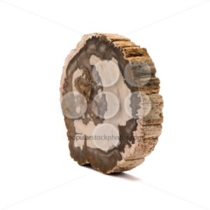 Petrified wood Madagascar side isolated white - Popular Stock Photos