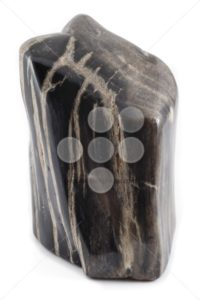 Petrified wood ancient piece black angle - Popular Stock Photos