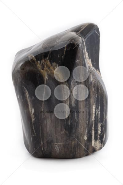 Petrified wood ancient piece black front – Popular Stock Photos