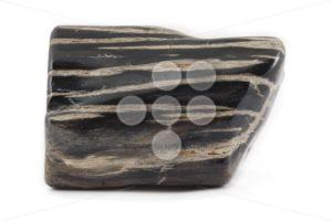 Petrified wood ancient piece black on side - Popular Stock Photos