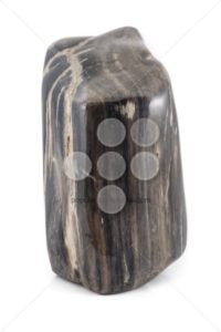 Petrified wood ancient piece black sideview - Popular Stock Photos