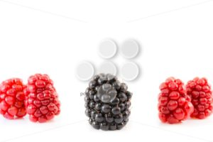Ripe and unripe blackberry being different - Popular Stock Photos