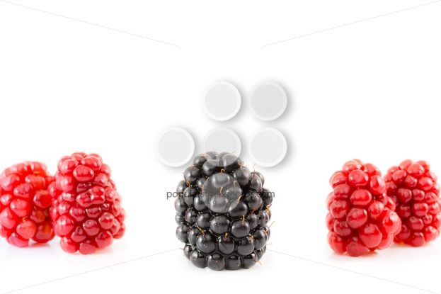 Ripe and unripe blackberry being different – Popular Stock Photos