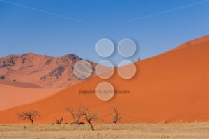 Sand dune dead trees people climbing Namibia - Popular Stock Photos