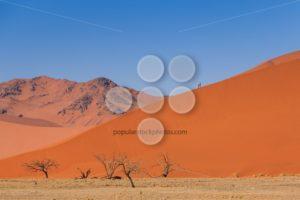 Sand dune dead trees people climbing Namibia - Popular Stock Photos