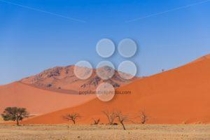 Sand dune with dead trees deadvlei Namibia - Popular Stock Photos