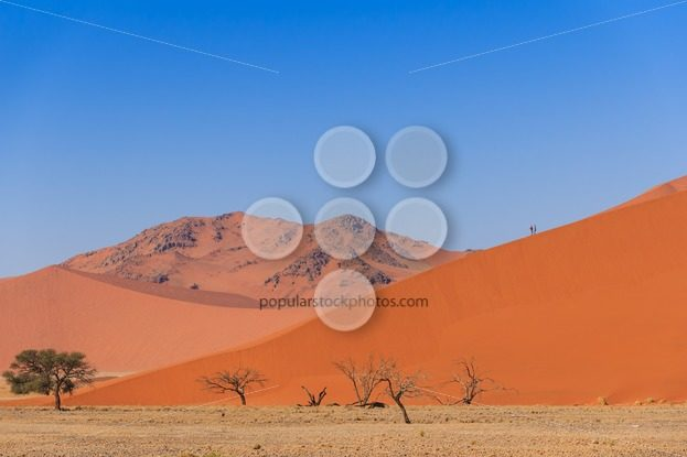 Sand dune with dead trees deadvlei Namibia – Popular Stock Photos