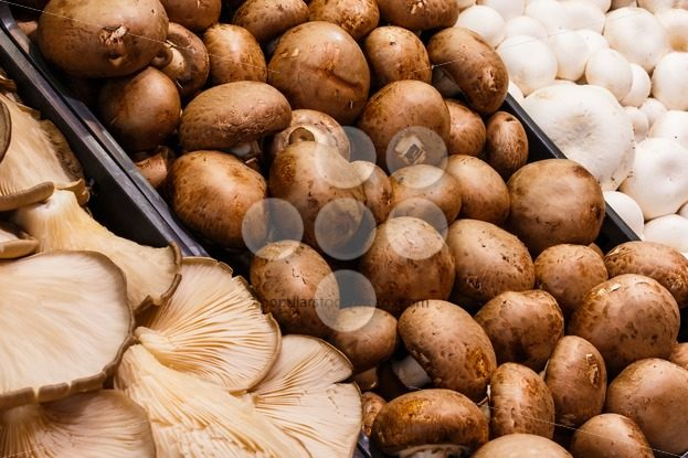 Several mushrooms market - Popular Stock Photos